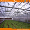 Commercial Multispan Glass Greenhouse for Vegetable