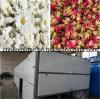 Large Capacity Continuous Belt Dryer Machine, Conveyor Mesh Belt Dryer
