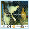 Hot DIP Galvanized/Electro Galvanized Hexagonal Wire Netting