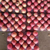 New Crop Chinese Fresh FUJI Apple