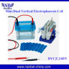 Electrophoresis Cell/Nucleic Acid Sequencing Electrophoresis