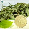 Stevia Extract/Stevioside (CAS No: 57817-89-7)
