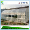 Large Scale Economic Film Greenhouse for Commercial Used