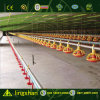 Low Cost Prefabricated Poultry House (L-S-C1-3)