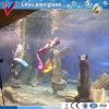 Animal and Mermaid Panel Used in Aquarium