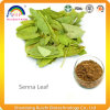 Senna Leaf Extract for Weight Loss