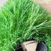 40mm Height Professional Artificial Landscaping Grass for Garden and Public