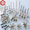 Variety Kinds of SS304 Screw Provide by Manufacturer