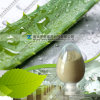 Aloe Vera Extracted Powder Aloin 10%-99%