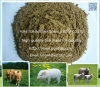 Fish Feed for Animal Fodder with Lowest Price Mash Form