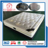 Comfort Made in China Export Euro Top Spring Mattress with Cheap Price