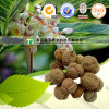 Natural Herbal Plant Raw Material Beautiful Galangal Fruit