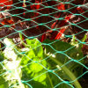 Polyethylene Vineyard Netting Fruit Garden Anti Bird Net