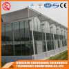 Multi-Span Steel Frame/ Aluminum Profile Glass Greenhouse for Vegetable