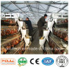 Poultry Farming Equipment Layer Chicken Cages