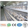 Small (Pullet) Chicken Cages System Equipment