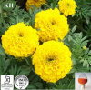 New General Biopesticide Marigold Root Extract Alpha-Terthienyl 0.1%