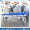 Food Processing Industry Weight Sorter