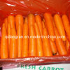 Carrot to Middle East, Southeast Asia