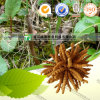 Health Care Herb Medicine Cordyceps Sinensis Worm Grass