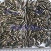 601 Type Raw Sunflower Kernel Food Grade