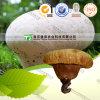100% Pure Natural Herb Medicine Lasiosphaera