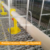 Farming Port Automatic Broiler Chickens Waterer for Chickens