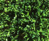 Wuxi Artificial Turf (ALOE-20Y5)