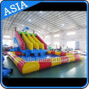 Giant Inflatable Water Amusement Park, Inflatable Dophlin Slide with Pool Water Park