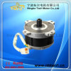 36V 500W DC Blushless Motor with Controller