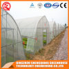 Agriculture Multi Span Film Greenhouses for Plants