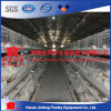 Hot DIP a Type Broiler Chicken Cage with Automatic Drinker System