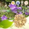 Pure Natural Herb Medicine Platycodon Grandiflorum Jie Geng