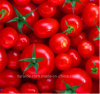 China Export Factory Canned Tomato Sauce Sauce