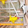 Normative Farm Use 15000 Layers A Frame Layer Chicken Cage