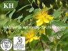 High Quality St. John′s Wort Extract 0.3%-1%Hypericins; 3% Hyperforin HPLC