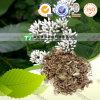 Pure Natural Herb Medicine Eupatorium Japonicum Ze LAN