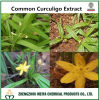 100% Natural Curculigo Orchioides/ Common Curculigo Powder Extract for Men′s Health