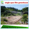 Hot Sale Plastic Tunnel Greenhouse