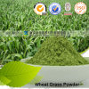 Health Benefits Extract Manufacturer Cost-Effective Wheat Grass Powder