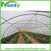 Cheap Single Tunnel Plastic Greenhouse