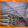 Multi-Span Venlo Type Greenhouse with PC Sheet Covered