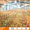 Modern Poultry Farm for Broiler with One-Stop Service