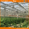 Auto environment Control Glass Greenhouse with Mobile Seeding Bed
