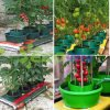 High Quality tomatoes Water Trough Planters