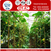 White Transparent HDPE Membrane for Greenhouses of Vegetable or Fruit