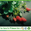 PP Spunbond Non Woven Weed Control Fabric for Strawberry Protection