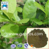 Natural High Quality Paraguay Tea Extract
