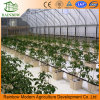 High-Tech Greenhouses Hydroponic for Vegetable Growing