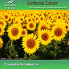 100% Natural Sunflower Extract 4: 1, 1o: 1